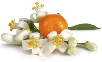 Orange Blossom (Neroli) Absolute Oil Blend - Citrus aurantium 3% Dilution in Organic Sunflower