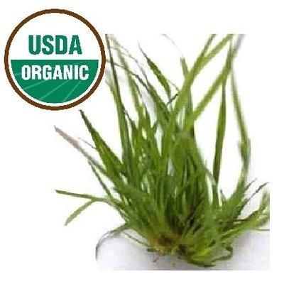 Vetiver Organic Essential Oil - Vetiveria zizanoides
