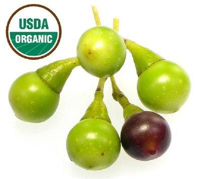 Ravintsara Organic Essential Oil - Cinnamomum camphora ct 1,8 Cineol