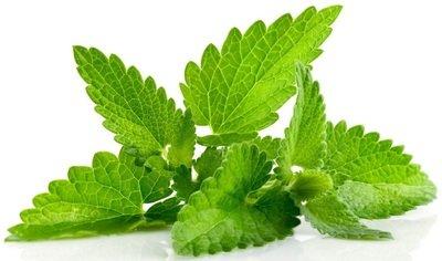 Spearmint Organic Essential Oil - Mentha spicata BULK