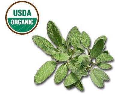 Sage Organic Essential Oil - Salvia officinalis