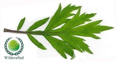Mugwort WC 5% Essential Oil Blend in Organic Carrier Oil