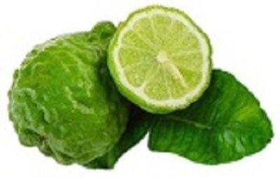 Bergamot Organic Essential Oil - Citrus bergamia BULK
