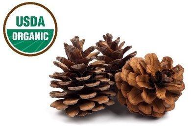 Pine Organic Essential Oil - Pinus sylvestris