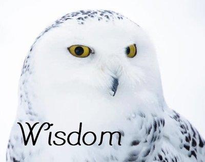 Wisdom Organic Essential Oil Blend