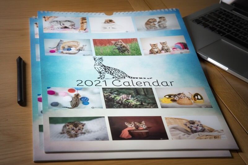 2021 Luxurious Bengal Cat Wall Calendar