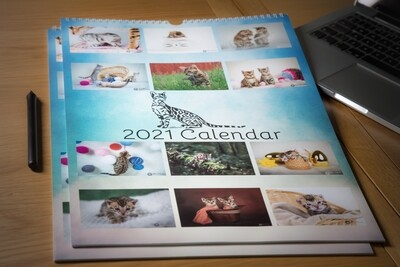 2021 Luxurious Bengal Cat Wall Calendar