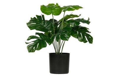 Montsera artificial plant gree