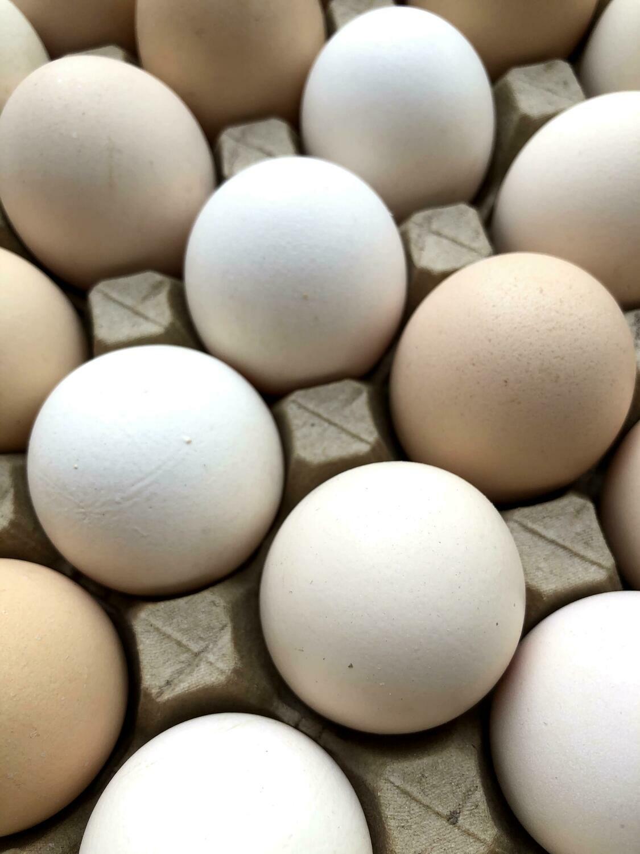 Native Eggs