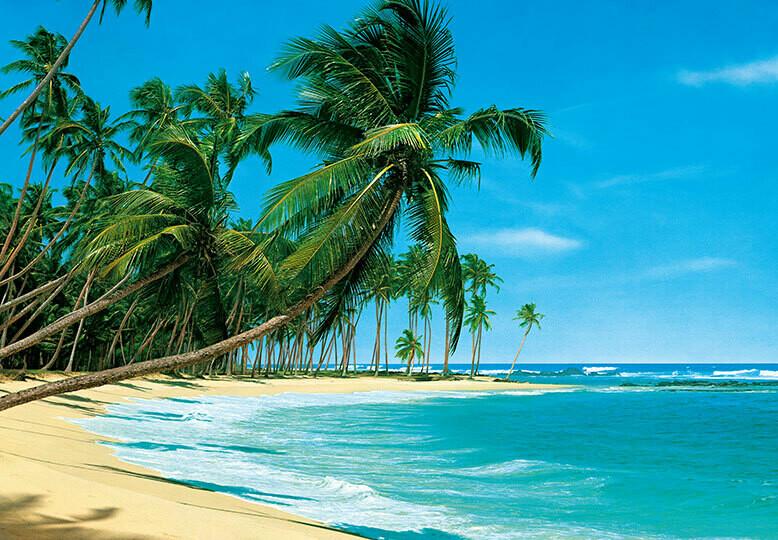 Fotomural Playa con palmeras 00220