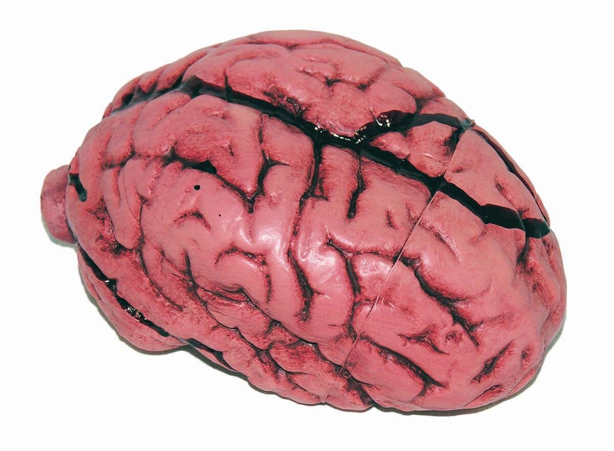 Deluxe Brain