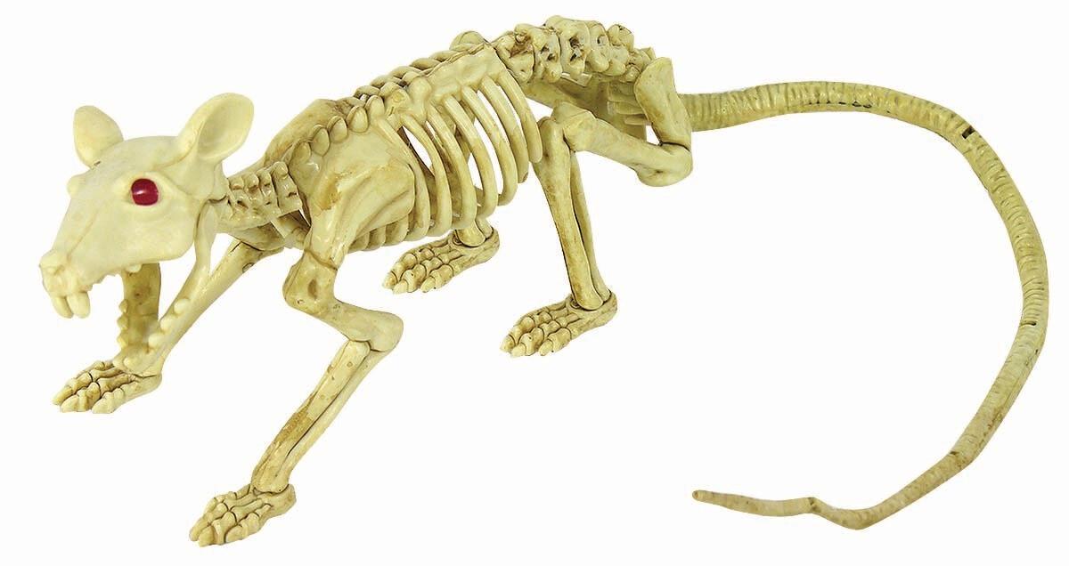 Skeleton Crawling Rat