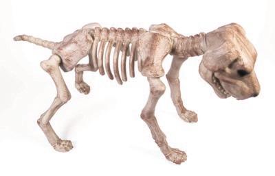 Bone Skeleton Dog - Large