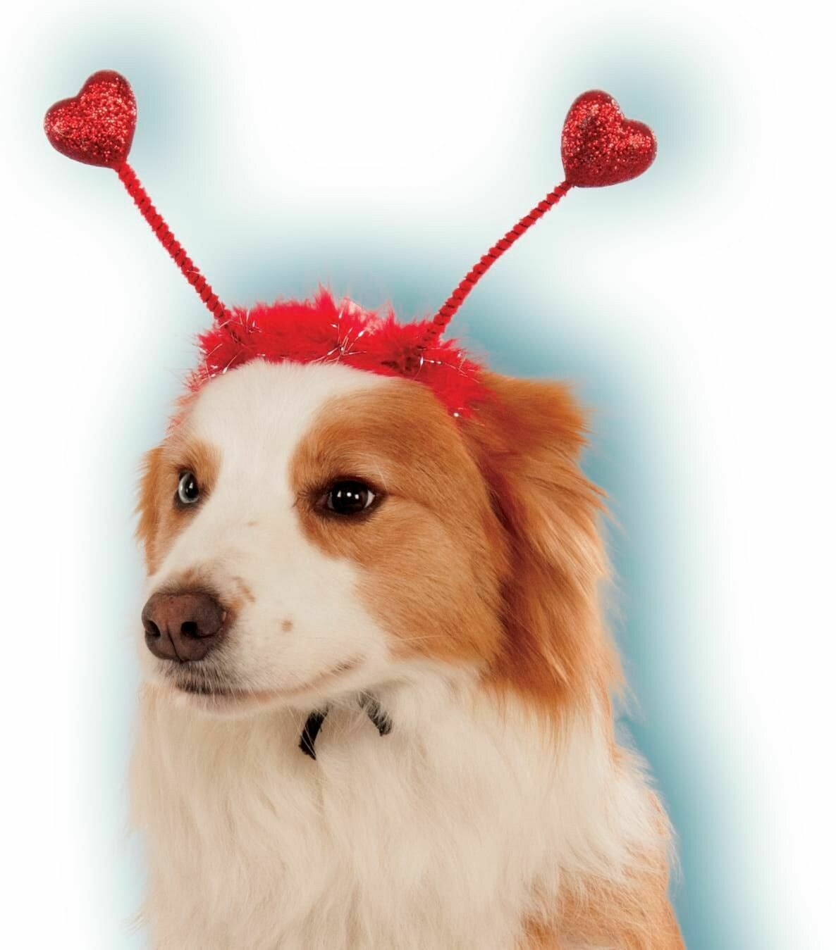 Pet Red Heart Boppers