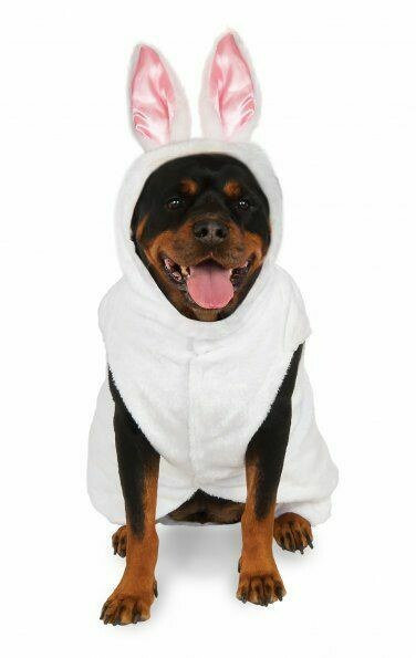 Big Dog Bunny Costume