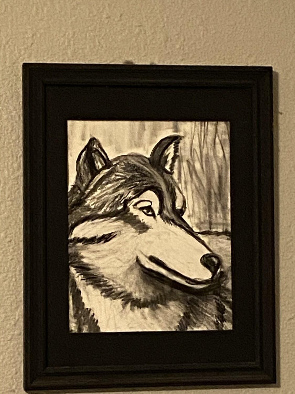 Wolf Charcoal Studies