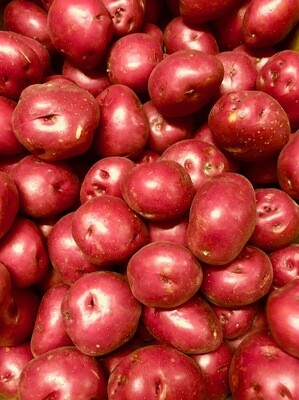 Red Potato /LB