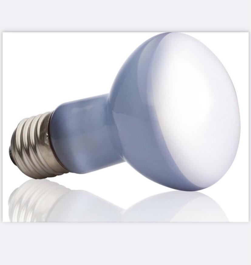 Reserve Lamp  Opfokkooi Kuikens