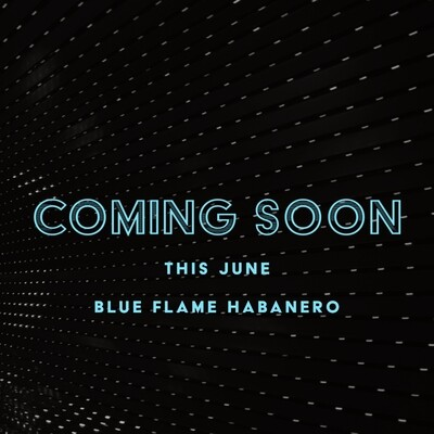 Blue Flame Habanero