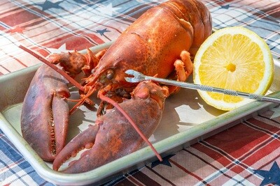 2  Live Maine Lobster