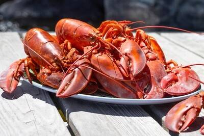 10 Live Maine Lobsters