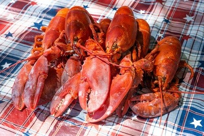 6 Live Maine Lobsters