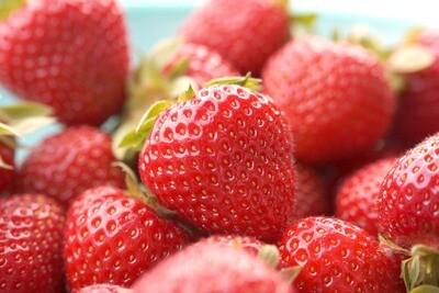 Strawberries 'Eversweet' | Bare Root - Gardener's Dozen (13)