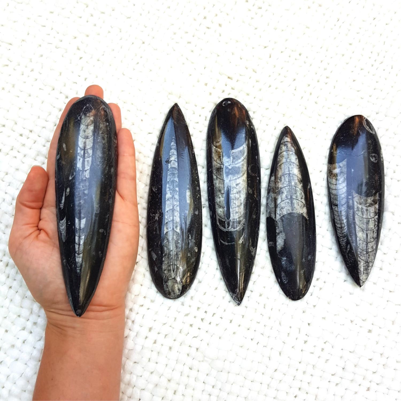 ORTHOCERAS Super Stone
