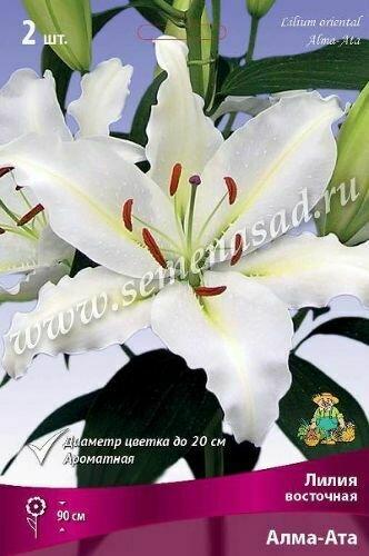 Лилии восточные Алма-Ата 2шт (белоснеж с кор пыльниками)