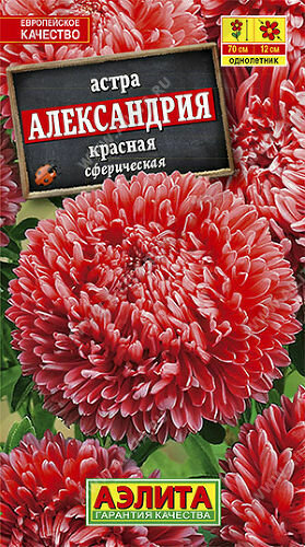 Астра Александрия красная  Аэ Ц