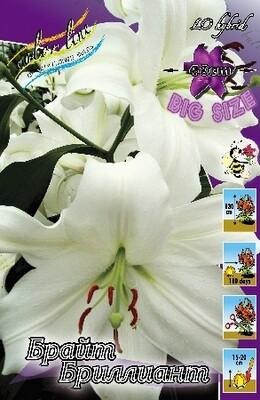 ЛИЛИЯ  'БРАЙТ БРИЛЛИАНТ 18/20'  ( Lilium Bright Brilliant); [LO]