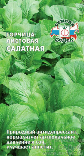 Горчица Салатная листовая (СД)