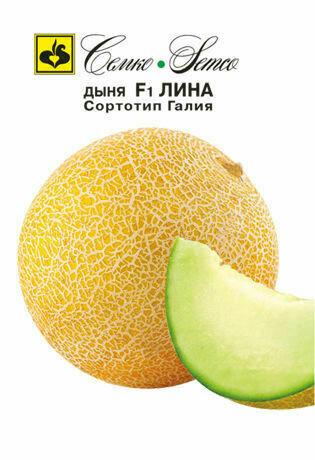 Дыня Лина (сортотип Галия) (СЕМ)