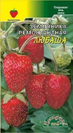 Земляника Любаша ремонтантная (ЦВ)