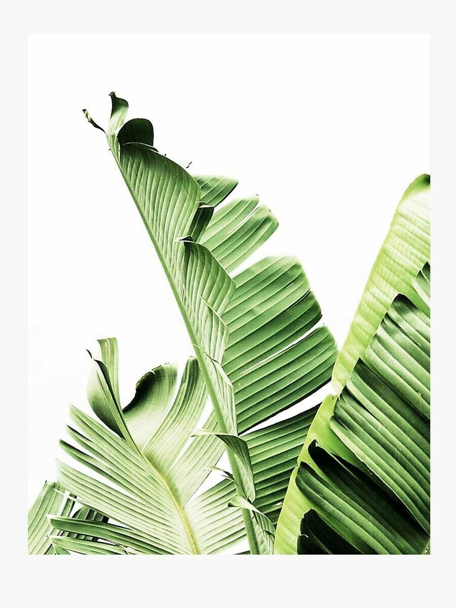 Tropical Banana leaf Minimalist Wallpaper