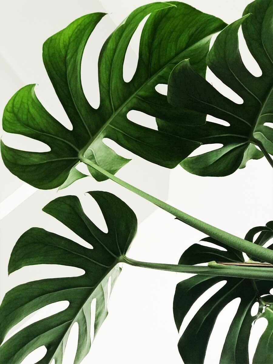 Tropical Multileaf Minimalist Wallpaper