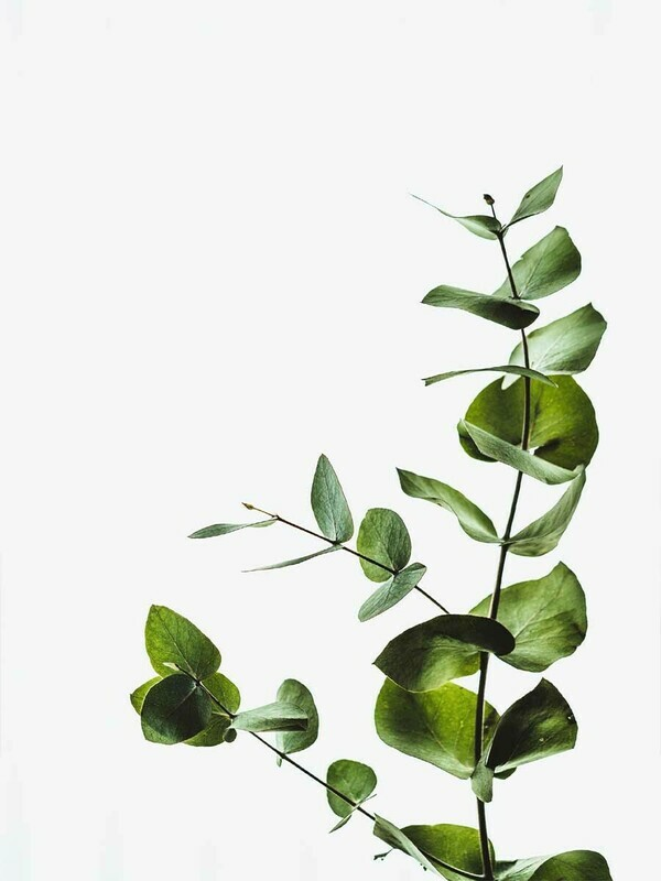 Tropical Plant Minimalist Poster