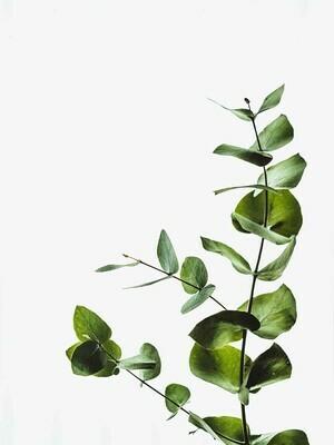 Plant Minimalist Poster