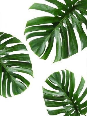 Minimalist Leaf Poster