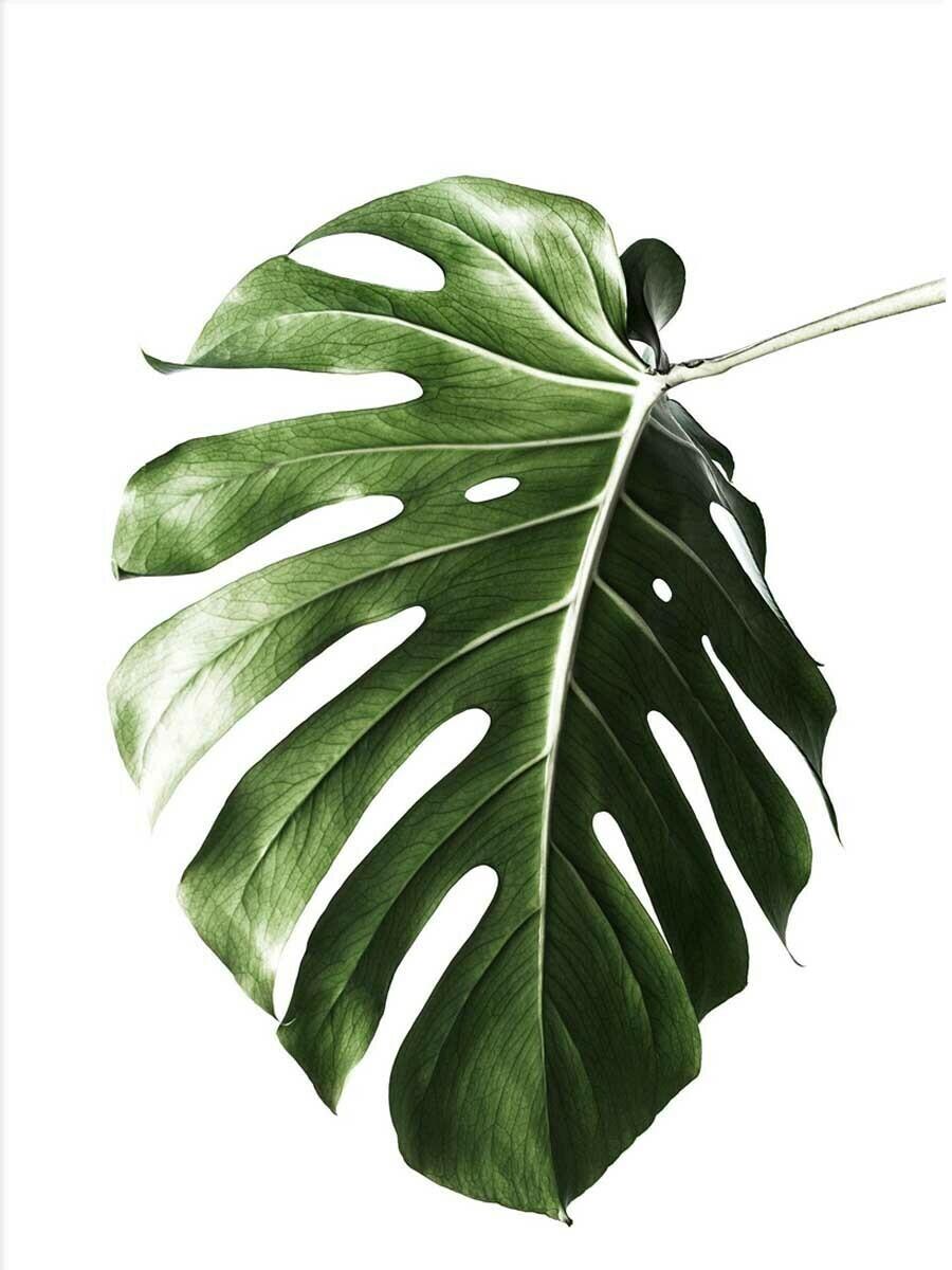 Tropical Leaf  Minimalist Poster