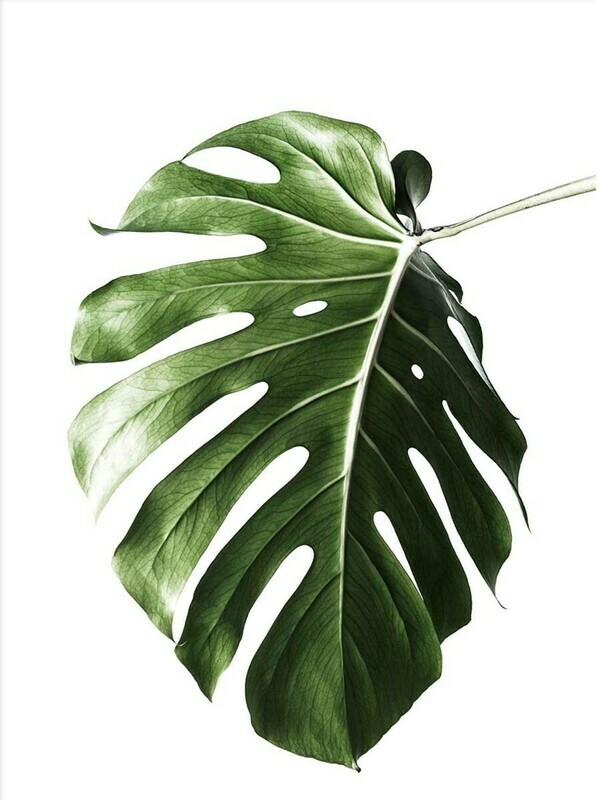 Tropical Leaf  Minimalist Poster