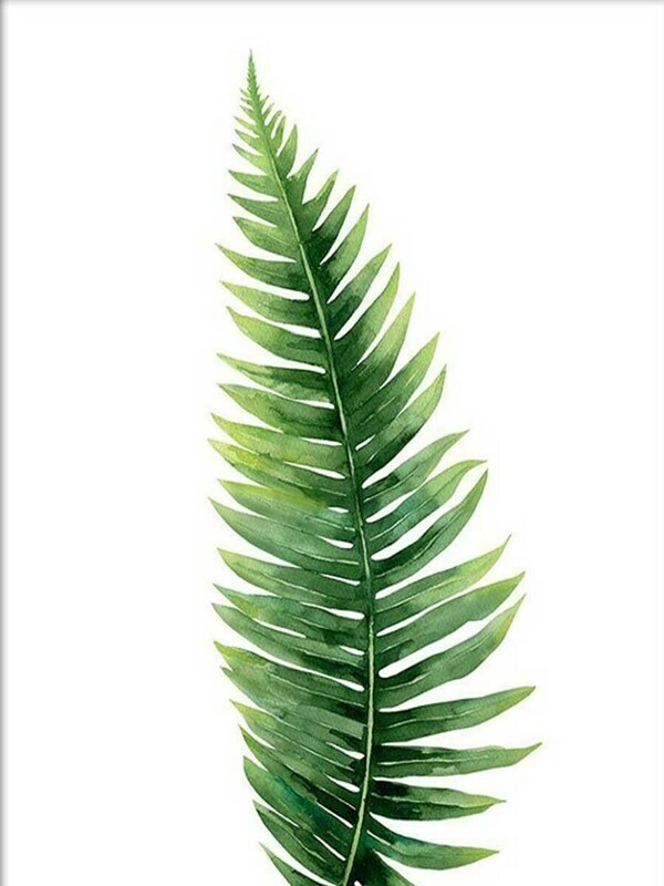 Tropical Fern Leaf Minimalist Wallpaper
