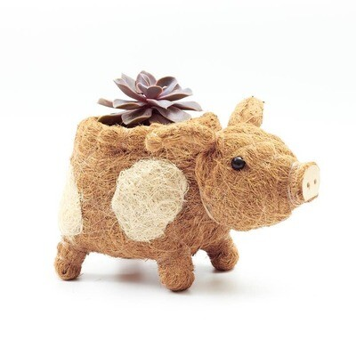 Country Pig Planter