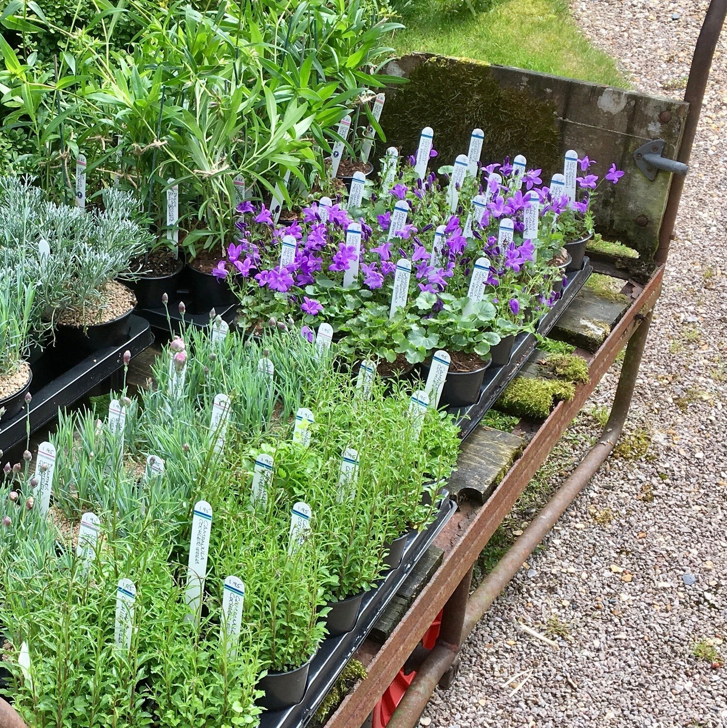 Plant gift selection