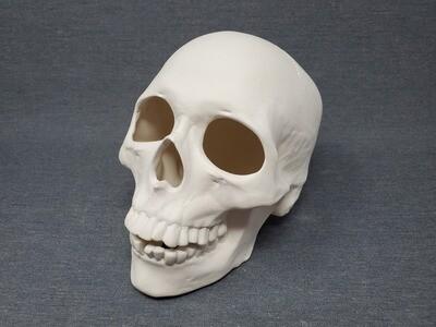 Skull - Large (No Lights)