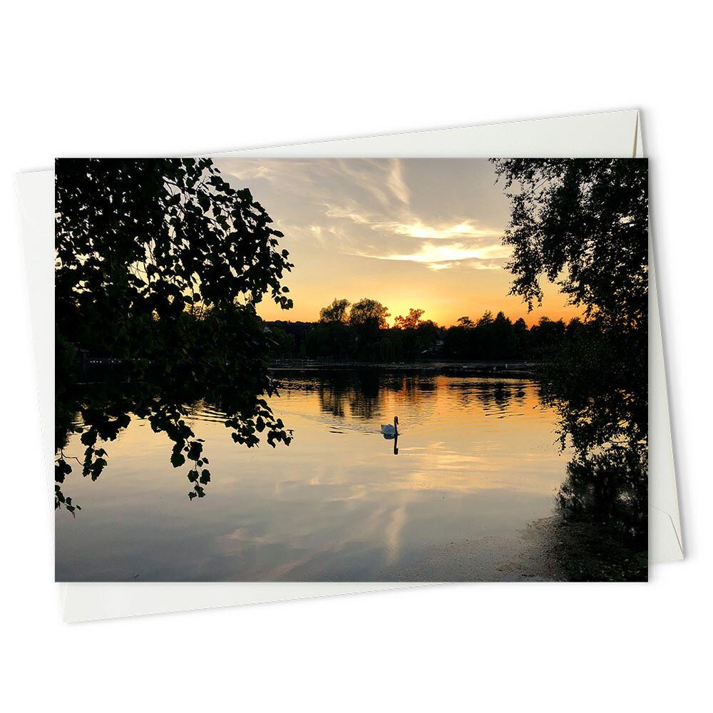 Sundown swan