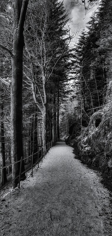 Veien videre