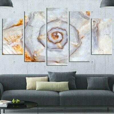 Great Skeleton Of Sea Shell - 5 Panel Canvas Print Wall Art Set
