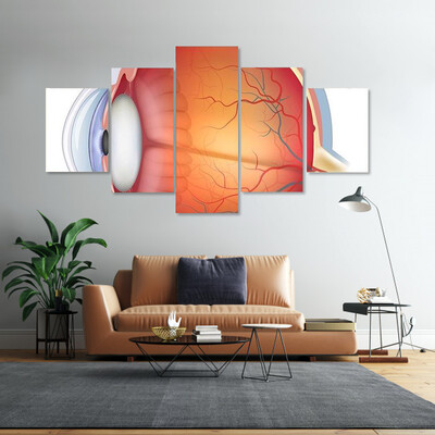 Human Eye Anatomy Multi Canvas Print Wall Art