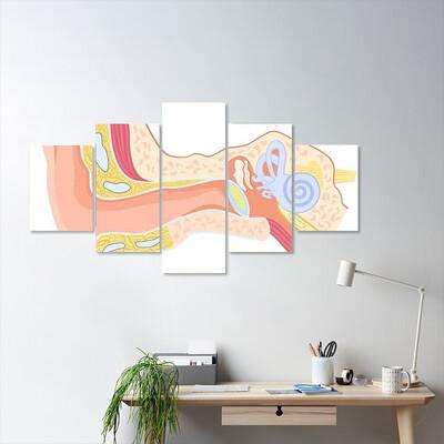 Human Ear Anatomy Multi Canvas Print Wall Art